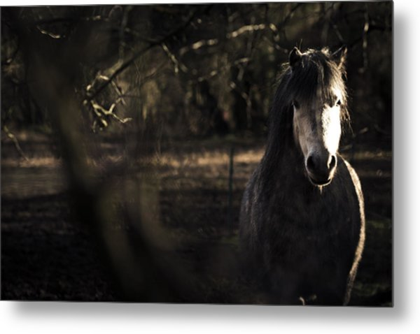 Pony In The Brambles Metal Print