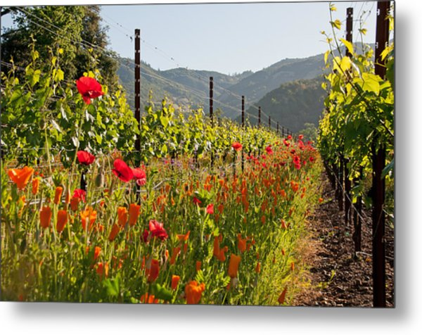 Poppies In The Vineyard Metal Print by Kent Sorensen