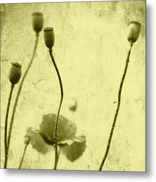 Poppy Art Image Metal Print by Falko Follert