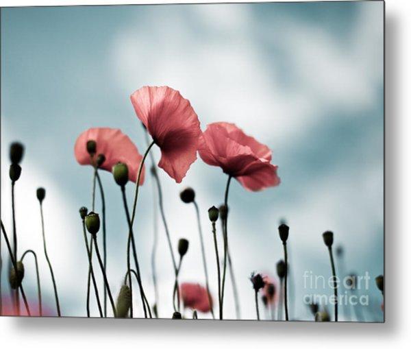 Poppy Flowers 07 Metal Print