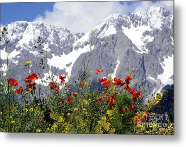 Poppy Flowers Under The Mountains Metal Print