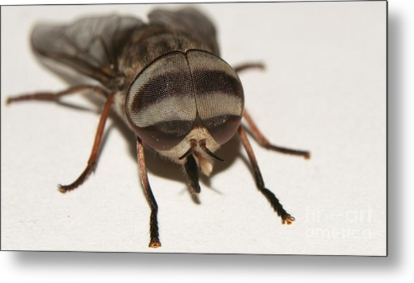Portrait Of A Fly Metal Print