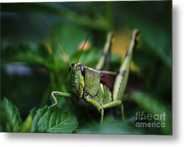 Portrait Of A Grasshopper Metal Print