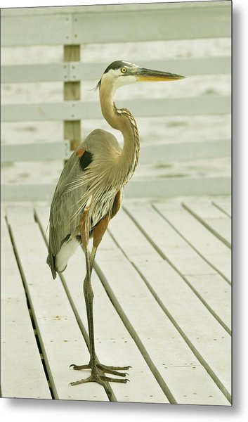 Portrait Of A Heron Metal Print