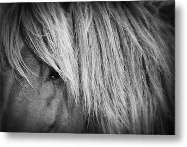 Portrait Of A Wild Horse Metal Print