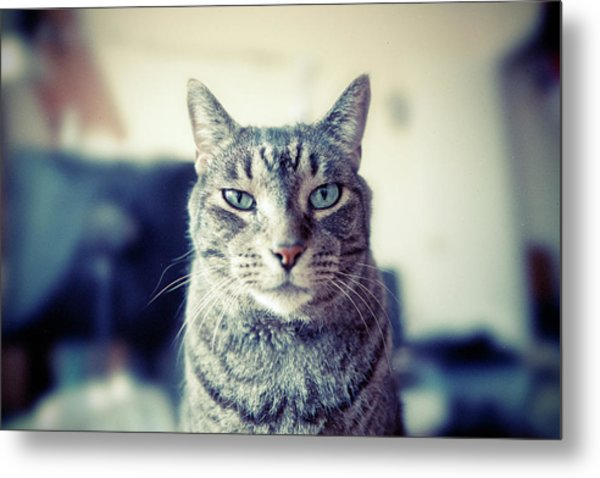 Portrait Of Cat Metal Print