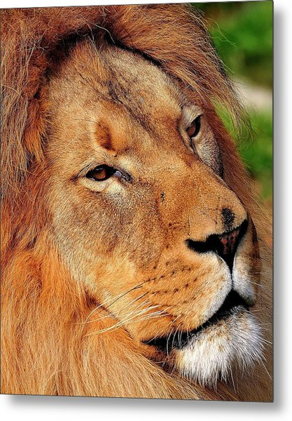 Portrait Of The King Metal Print