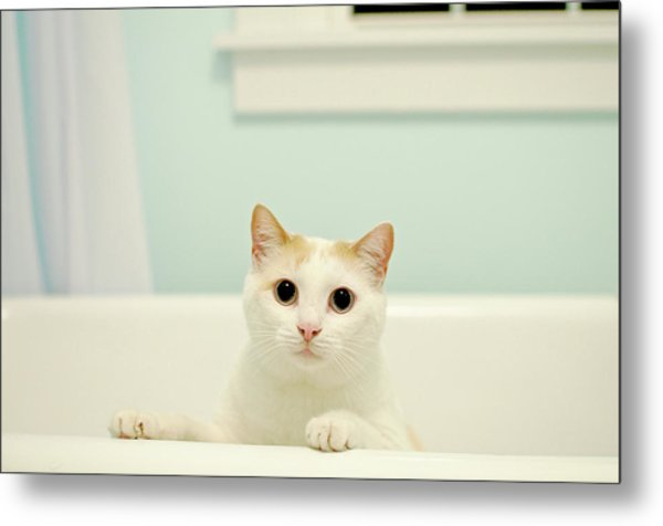 Portrait Of White Cat Metal Print