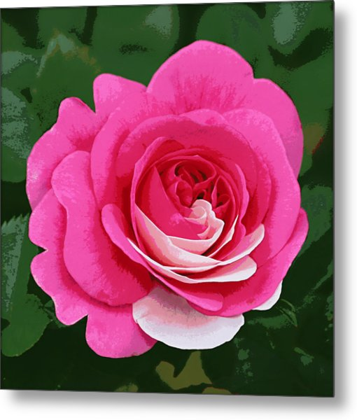 Poster Rose Metal Print by Jim Speirs