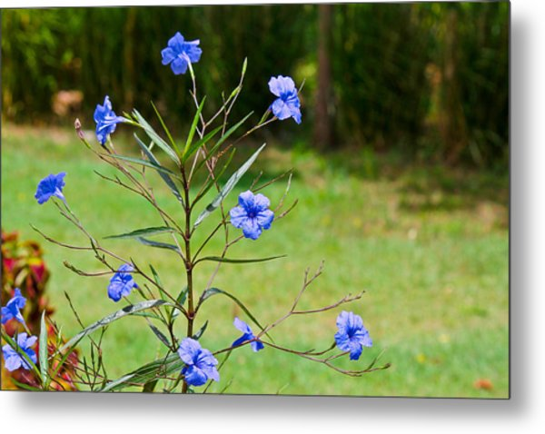 Pretty Blue Flowers Metal Print by David Alexander