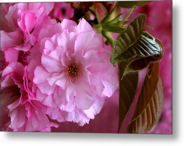 Pretty In Pink Blossom Metal Print