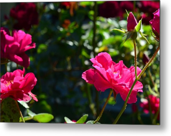 Pretty In Pink Metal Print by Chandra Wesson