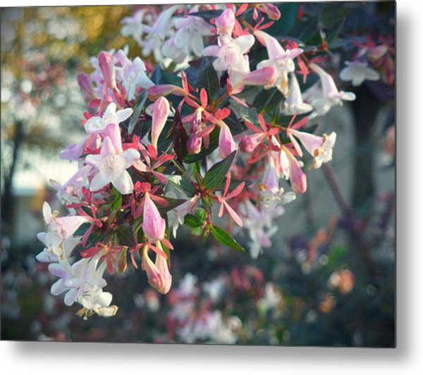 Pretty In Pink Metal Print by Lee Yang
