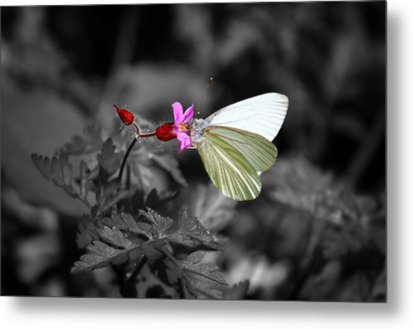 Pretty Margined White Butterfly Metal Print