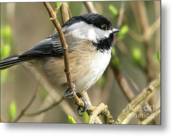 Pretty Perch Metal Print