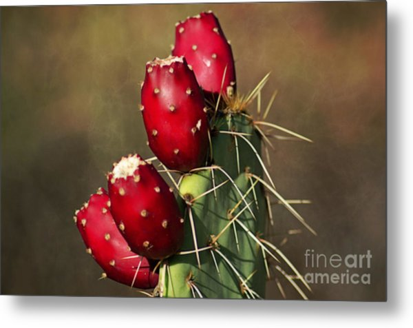 Prickley Pear Fruit Metal Print