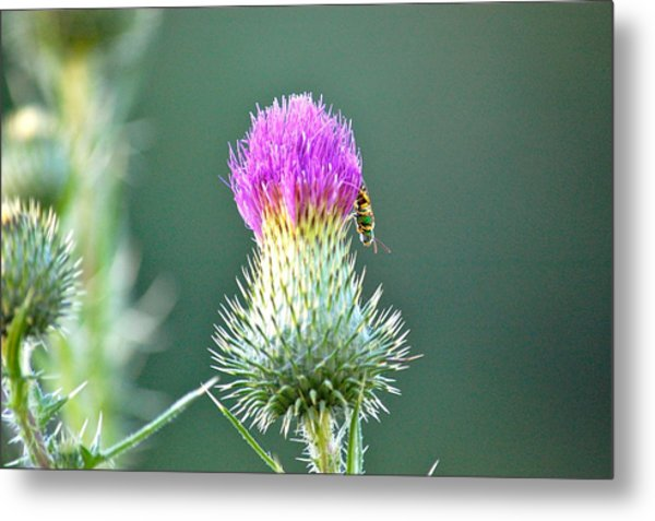 Prickly Situation Metal Print