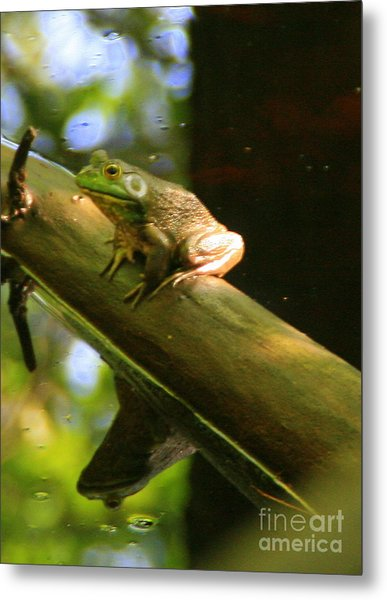 Prince In Frogs Clothing Metal Print