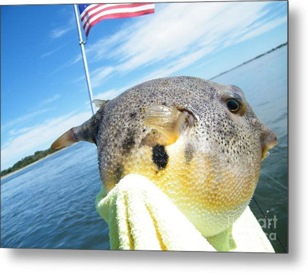 Puffer Love Metal Print by Laurence Oliver