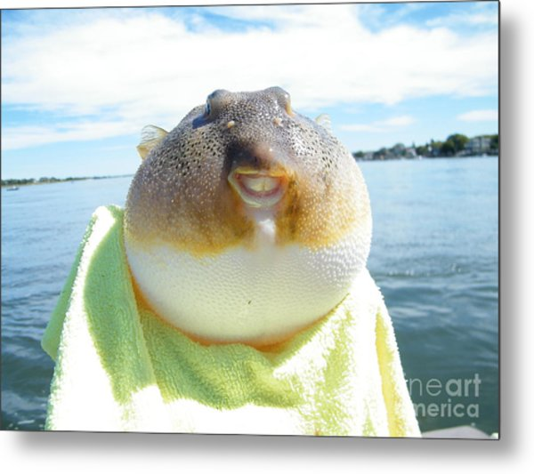 Puffer Smile Metal Print by Laurence Oliver