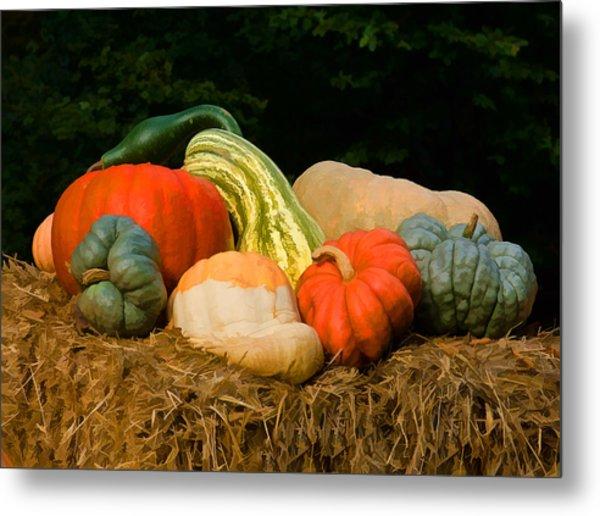 Pumpkins And Gourds Metal Print