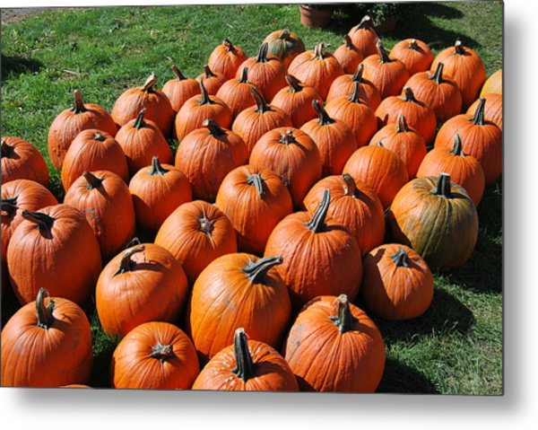 Pumpkins Galore Metal Print