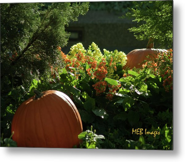 Pumpkins In Autumn Metal Print