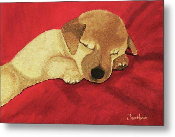 Puppy Nap Time Metal Print