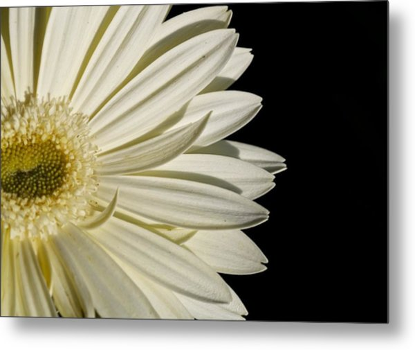 Purity Metal Print by Jyotsna Chandra