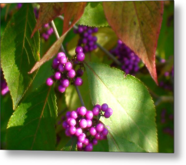 Purple Beads Metal Print by Lee Yang