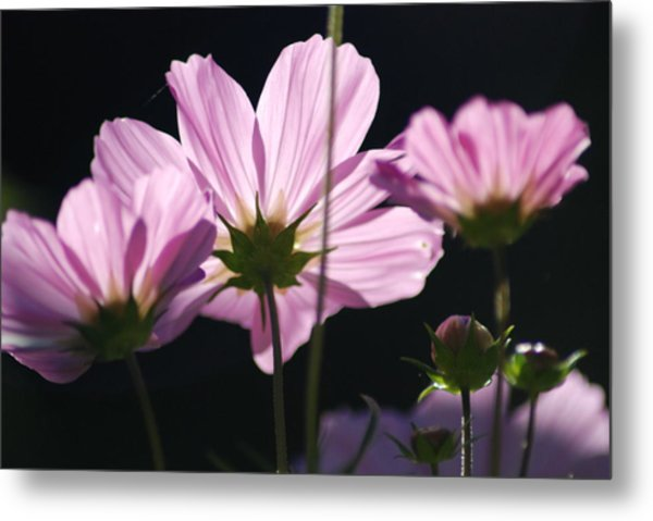 Purple Cosmos Metal Print