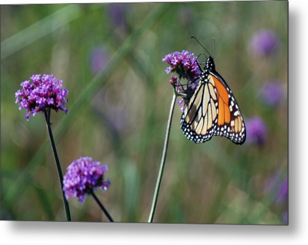 Purple Flower With Butterfly Metal Print