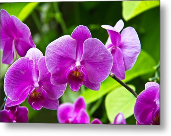 Purple Flowers In A Bunch Metal Print