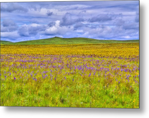 Purple Flowers On The Prairie Metal Print by Jen TenBarge