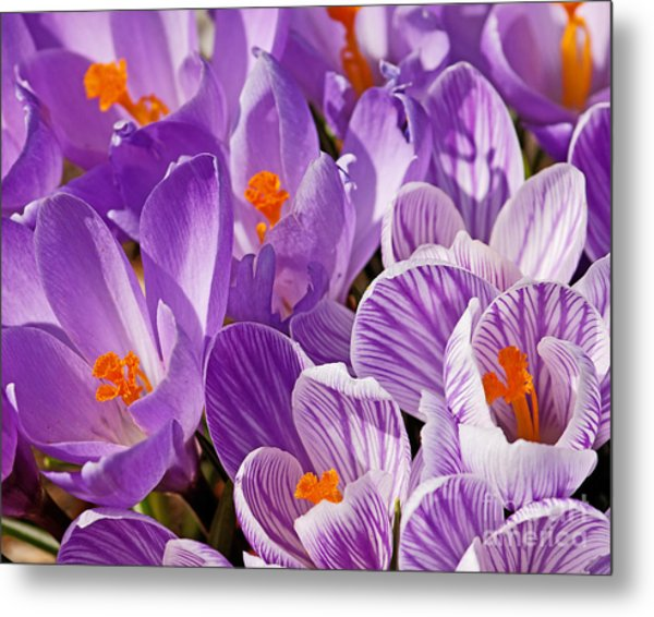Purple Oh Purple Metal Print