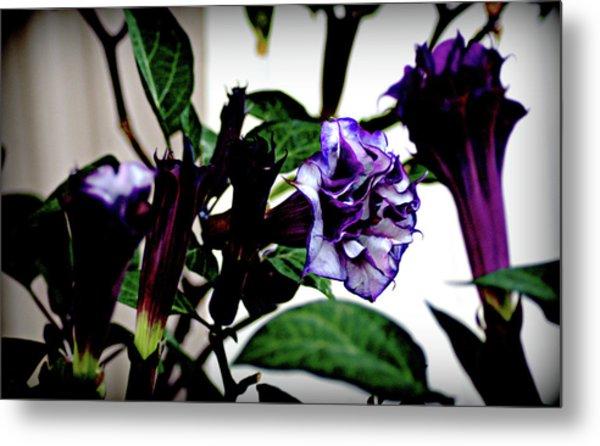 Purple People Eater Trumpet Flower Metal Print by John Wright