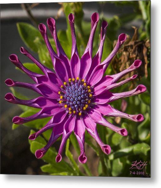 Purple Sun Metal Print