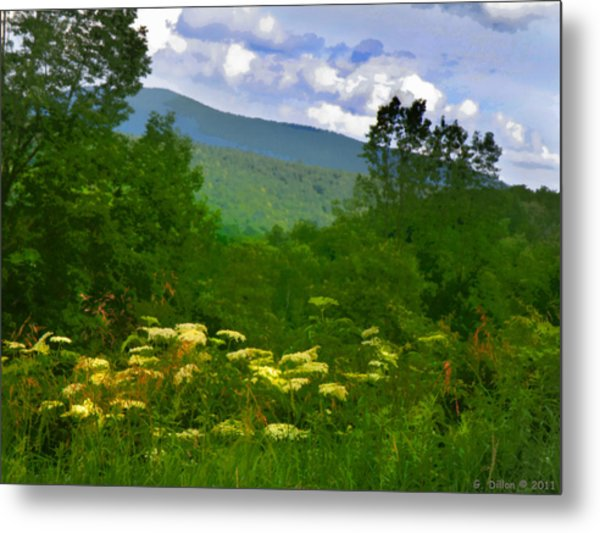 Queen Anne's Lace With A View Metal Print
