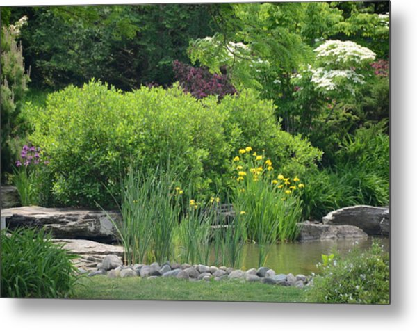 Quiet Pond Metal Print by Michael Carrothers