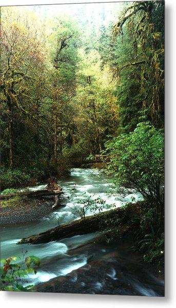 Quineault Rain Forest Metal Print