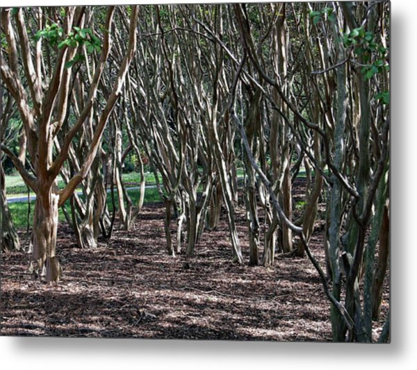Quirky Trees Metal Print