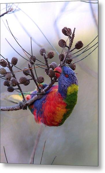Rainbow At Play Metal Print