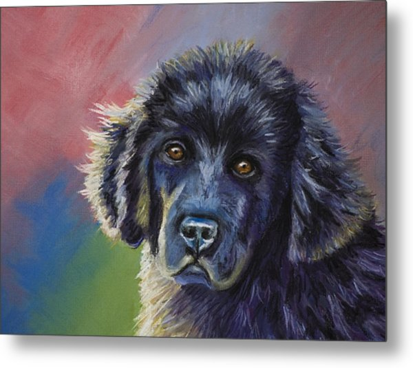 Rainbows And Sunshine - Newfoundland Puppy Metal Print