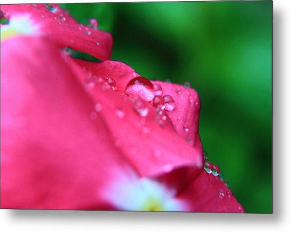 Raindrops On A Flower I Metal Print