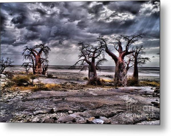 Rays On The Baobabs Metal Print