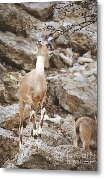 Reach Metal Print by DiDi Higginbotham