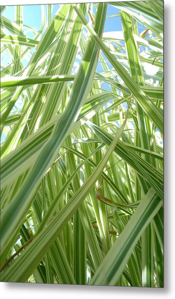 Reach For The Sky Metal Print by