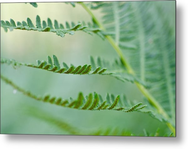 Reaching Ferns Metal Print by Margaret Pitcher