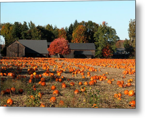 Ready For Pickin Metal Print by Kenneth Drylie