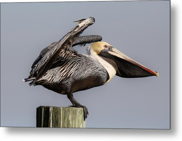 Ready For Take Off Metal Print by Paulette Thomas